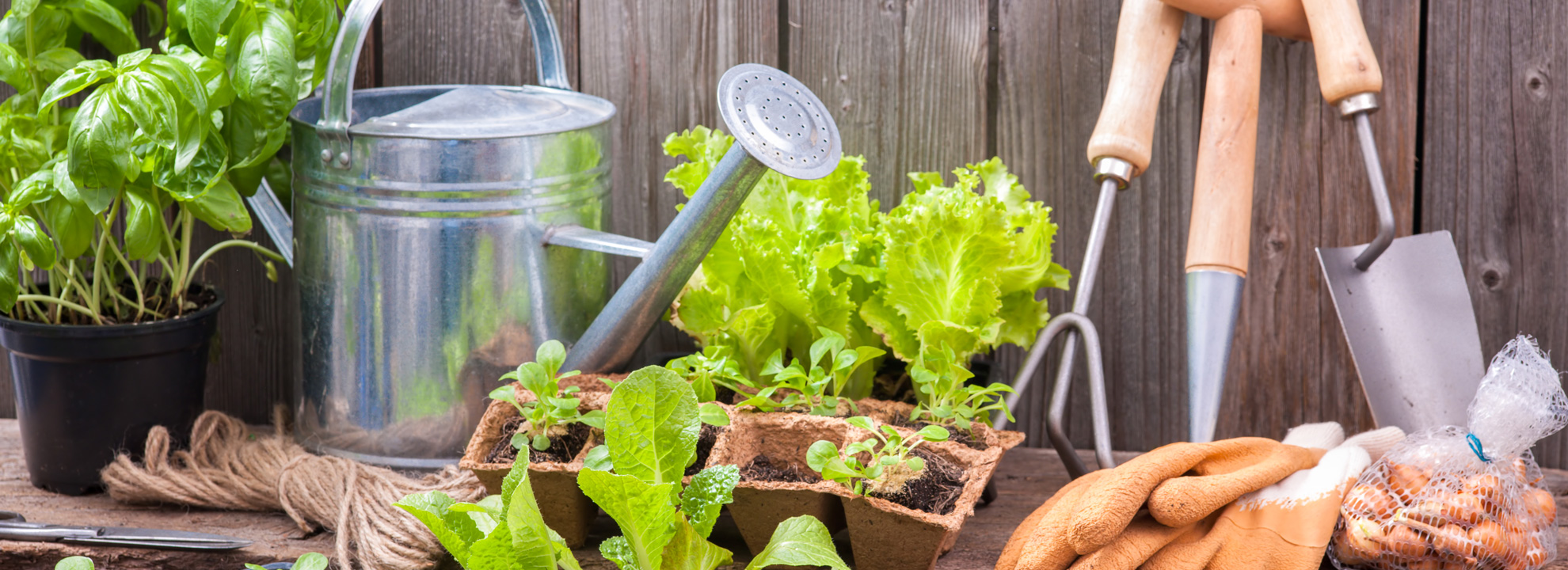 ten websites to help you grow your best vegetable garden ever empart